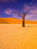 Skeleton Trees in Dead Vlei, Namibia World Heritage Site, Namibia Fotografisk tryk af Michele Westmorland
