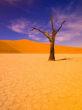 Skeleton Trees in Dead Vlei, Namibia World Heritage Site, Namibia Photographic Print by Michele Westmorland