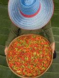 Gavriel Jecan - Farmer Selling Chilies, Isan region, Thailand Fotografická reprodukce