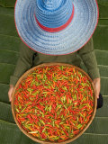 Farmer Selling Chilies, Isan region, Thailand Photographic Print by Gavriel Jecan