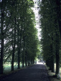 A Tree Lined Path on the University Grounds, Cambridge, England Photographic Print by Taylor S. Kennedy