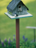 A Tree Swallow Sits on the Front Porch of Its House Photographic Print by Taylor S. Kennedy
