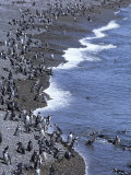 Magellan Penguin Colony, Punta Tombo, Patagonia, Punta Tombo Provincial Reserve, Argentina Photographic Print by Holger Leue