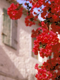 Red Flowers on Main Street, Kardamyli, Messina, Peloponnese, Greece Photographic Print by Walter Bibikow