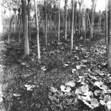 Wood with Mallow Leaves Photographic Print