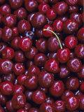 Flathead Sweet Cherries, Montana, USA Stampa fotografica di Chuck Haney