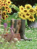 Wellington Boots, Basket, Helianthus (Sunflower), Apple Stampa fotografica di Martine Mouchy