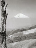 Mount Fuji and Dead Tree Photographic Print