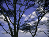 Trees in Kwazulu Natal, South Africa Prints by Ryan Ross
