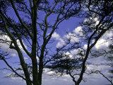 Trees in Kwazulu Natal, South Africa Prints by Ryan Ross