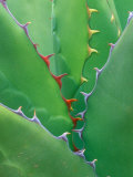 Agave, Sonora Desert Museum, Tucson, Arizona, USA Photographic Print by Rob Tilley