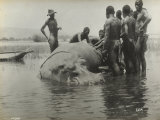 Natives During the Capture of a Hippopotamus Photographic Print