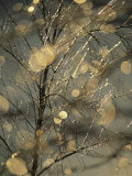 The Frozen Branches of a Small Birch Tree Sparkle in the Sunlight, Waynesboro, Pennsylvania Photographic Print by Raymond Gehman