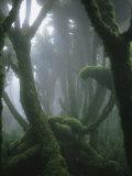 Fog-Enshrouded Rain Forest in Rwanda's Virunga Mountains Fotografisk tryk af Michael Nichols