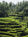 Terraced Rice Fields on Bali Island, Indonesia Photographie par Paul Chesley