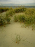 Grasses on Dunes, Mi, USA Photographic Print by Willard Clay