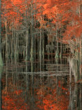 Cypress Swamp with Reflections, George Smith State Park, Georgia, USA Photographie par Joanne Wells