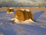 Field of Hay Rolls in Winter, Michigan, USA Photographic Print by Willard Clay
