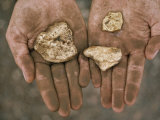 Three Gold Nuggets in a Miner's Hands, Serra Pelada, Amazon River Basin, Brazil Fotoprint van James P. Blair