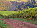 Dirt Road Along Acres of Vines at Knutsen Vineyard in the Willamette Valley, Oregon, USA Photographic Print by Janis Miglavs
