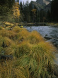 Grasses Along Merced River in Autumn in Yosemite National Park, California Photographic Print by Phil Schermeister