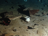 "Ceramic Bowl and Other Debris from the R.M.S. ""Titanic"" Photographic Print by Emory Kristof"