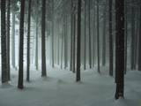 Snow Covers a Spruce Forest Photographic Print by John Eastcott & Yva Momatiuk
