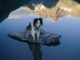 A Dog Perches Upon a Rock in the Middle of a Glassy Lake Photographic Print by Joel Sartore