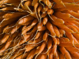 Fresh Carrots for Sale at Market in Helsinki, Finland Photographic Print