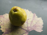 Pear on Leaf Close-up, in Marin, California, United States Photographic Print