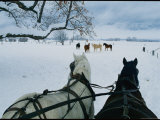 Horses Pull a Carriage Through the Snowy Landscape Photographic Print by Joel Sartore