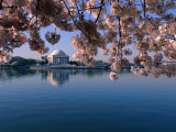 Japanese Cherry Blossoms Frame the Jefferson Memorial and the Tidal Basin Reproduction photographique par Medford Taylor