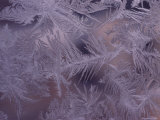 Frost on a Window Creates a Beautiful Pattern Photographic Print by Todd Gipstein