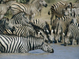 Plains Zebra at a Water Hole in Chobe National Park Photographic Print by Beverly Joubert