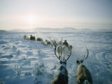Caribou-Drawn Sleds Travel Across the Snowy Steppe Photographic Print by Dean Conger