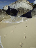 Footprints on the Beach Photographic Print by Bill Curtsinger