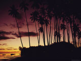 Kapuaiwa Coconut Grove Contains the Last Surviving Royal Coconut Palms Photographic Print