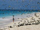 A Woman Walks on the Beach Among Terns Photographie par Bill Curtsinger