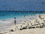 A Woman Walks on the Beach Among Terns Photographic Print by Bill Curtsinger