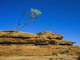 A View of a Eucalyptus Tree at the Top of a Cliff Photographic Print