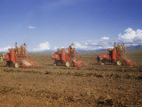 Combines Digging, Cleaning, and Sacking Peanuts at Kongwa Photographic Print by W. Robert Moore