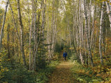 A Woman Walks Down a Birch Tree-Lined Trail in Autumn Photographic Print by George F. Mobley