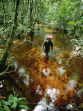 An Expedition Member Slogs Through a Swamp Photographic Print by Michael Fay