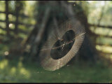 A Spider Weaves its Web Near a Farm Fence and Post Pile Photographic Print by George F. Mobley
