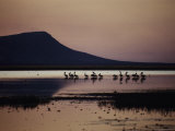 Pelicans Feed at Twilight on the Parry Lagoon Nature Reserve Near Wyndham Photographic Print by Sam Abell