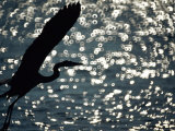 A Silhouette of a Heron Near the Water Photographic Print