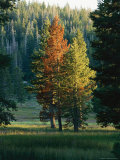 Trees Bearing the Colors of Fall Photographic Print