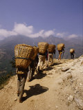 Porters Carrying Loaded Baskets Along a Trail Photographic Print by Michael S. Lewis