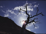 A Tree is Silhouetted against the Sky Photographic Print by George F. Mobley