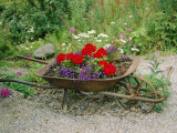 View of an Old Wheelbarrow Used for Summer Flowers Photographic Print by George F. Mobley
